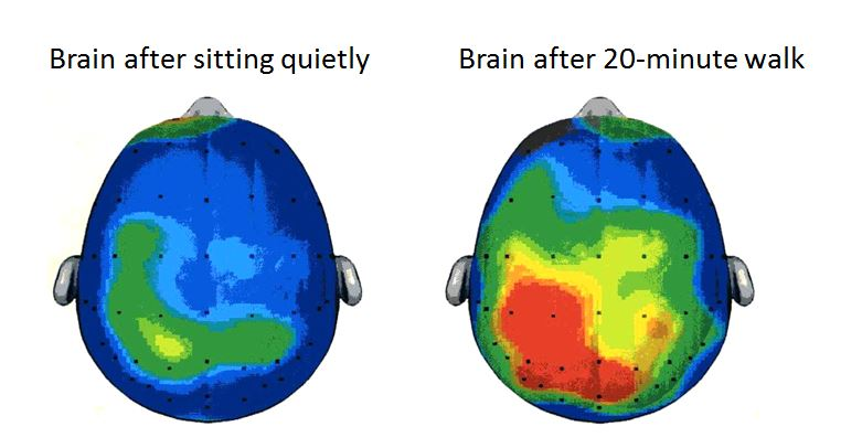 kids-brains-on-exercise.JPG